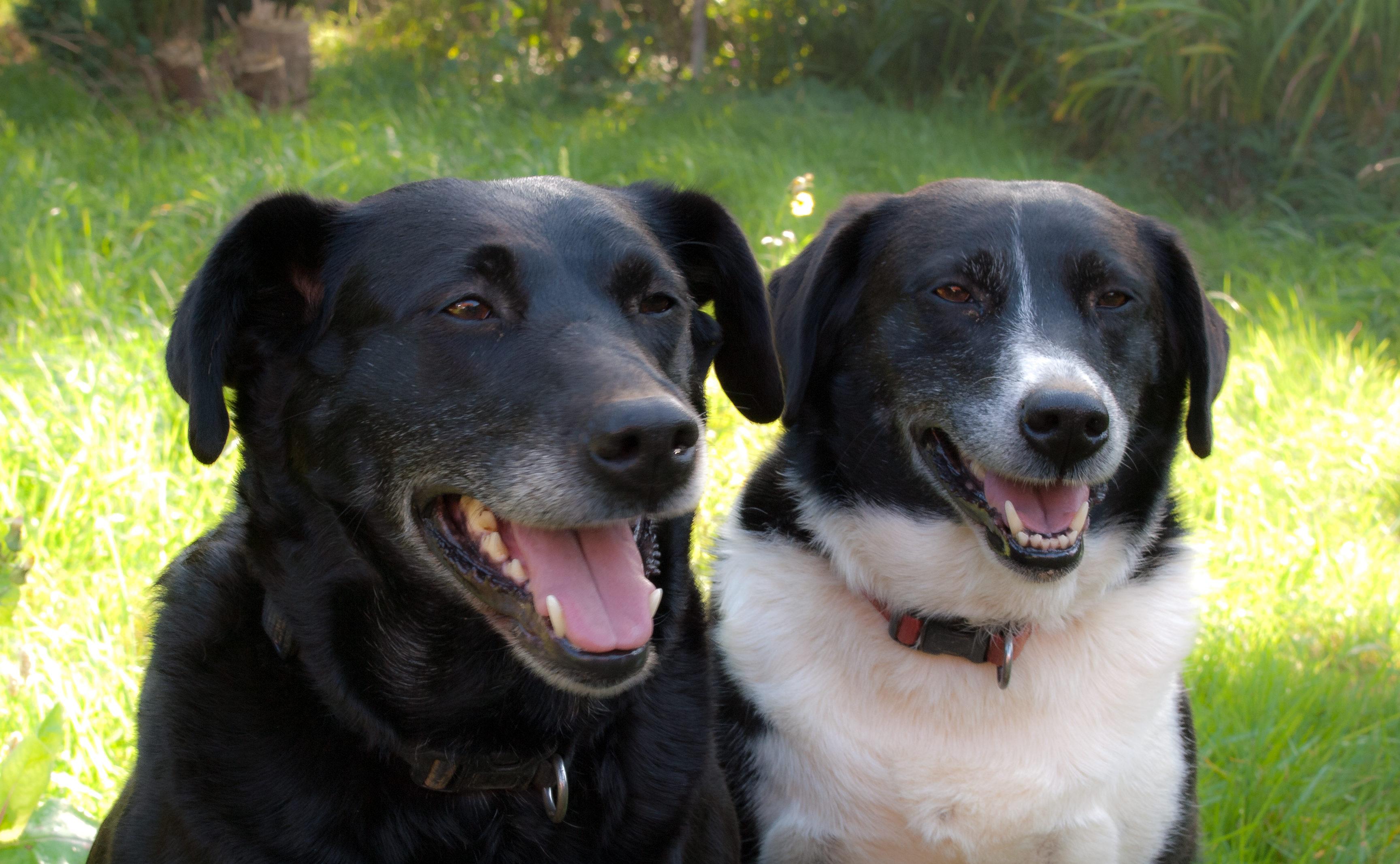 家族犬2匹